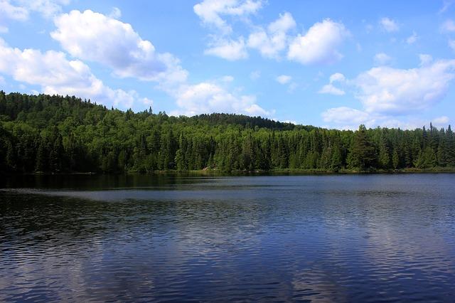 imagen casas prefabricadas ecologicas bosque y agua